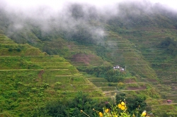 Foggy Day at Banaue Rice Terraces