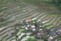 Banaue Rice Terraces With House and Green Spot and Rice