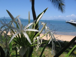 Scene Near Great Barrier Reef with Nice Flowers
