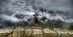 Caracara Chilling at Machu Picchu