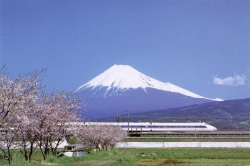 Mount Fuji With a Shinkansen (Railway Lines) and Sakura (Cherry) Blossoms in the Front