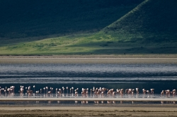 Flamingoes in the Ngorongoro Crater