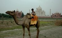 Unofficial Guide to the Taj With Camel