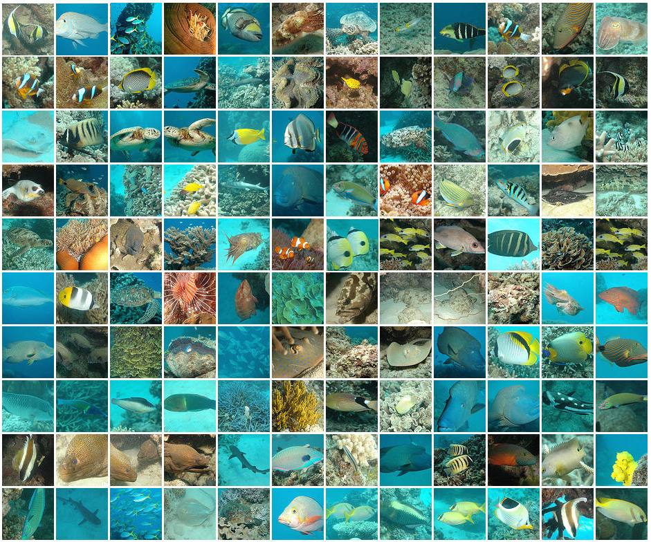 Great Barrier Reef Pictures Photos Facts Queensland
