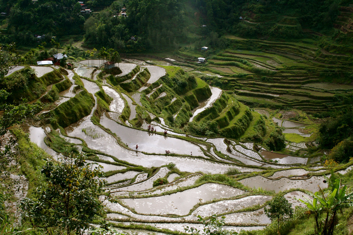 Clear and Sharp View of Banaue Rice Terraces
