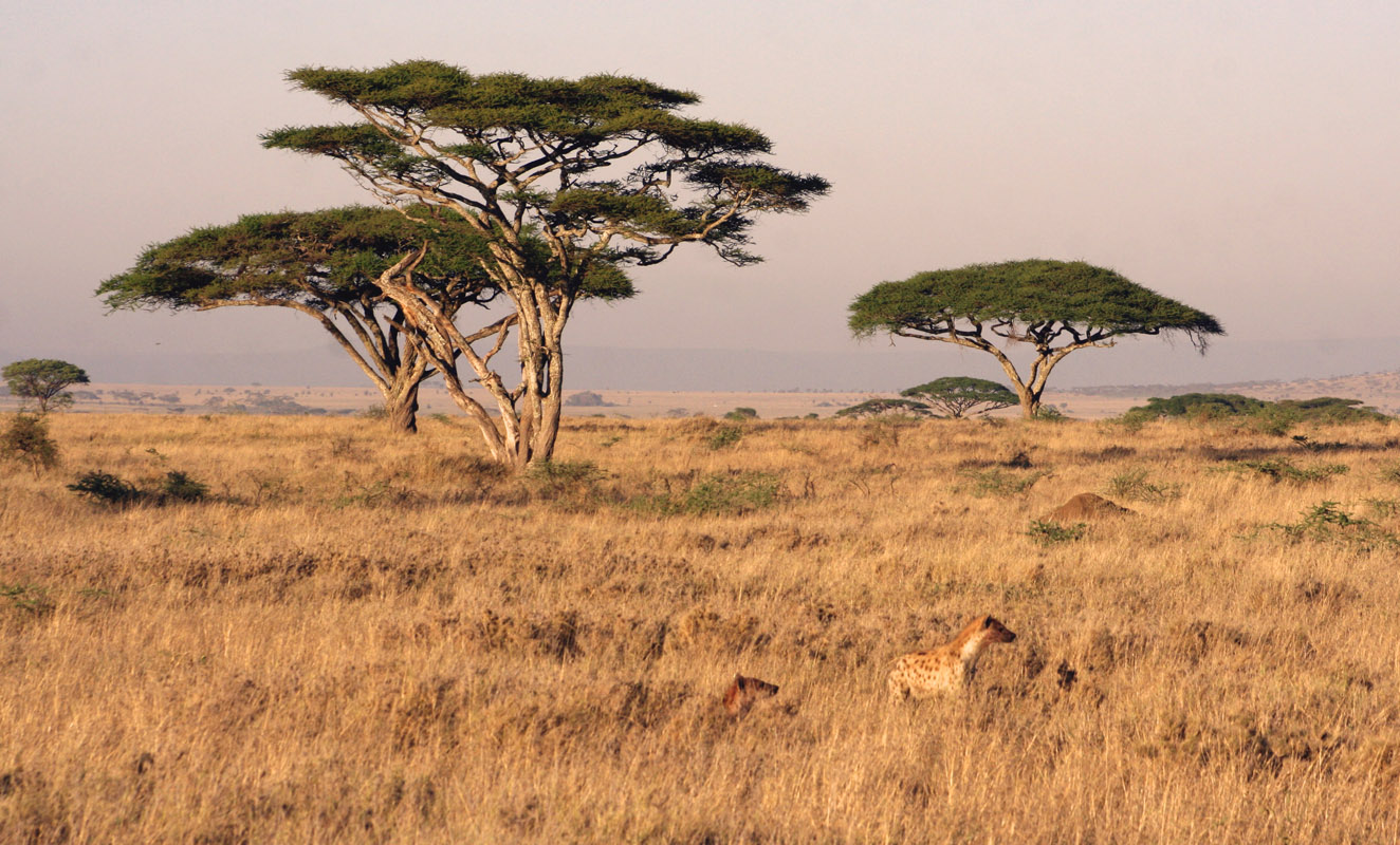 Serengeti Tanzania  city pictures gallery : Serengeti Migration Pictures & Facts Tanzania &