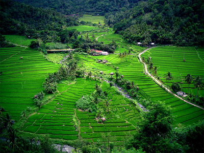 Bali's Rice Terraces