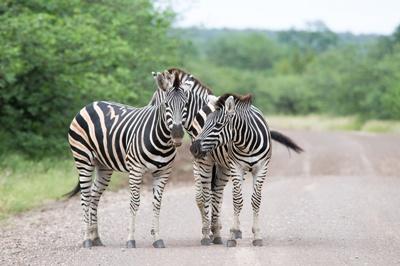 Kruger National Park 400