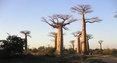 Madagascar 400