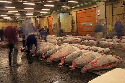 Tsukiji Fish Market 400