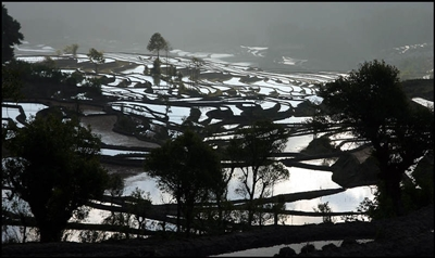 Yuanyang Rice Terraces 400