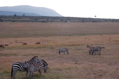 Kenya Nat Park 400