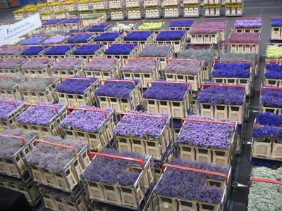 Aalsmeer Flower Auction 400