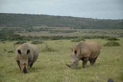 Garamba National Park, Africa 400