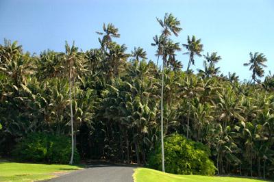Lord Howe Island-400