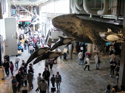 Monterey Aquarium 400
