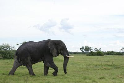 Okavango Delta 400
