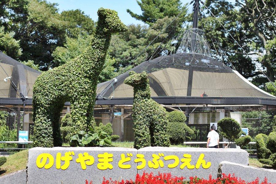 Image Gallery nogeyama zoo
