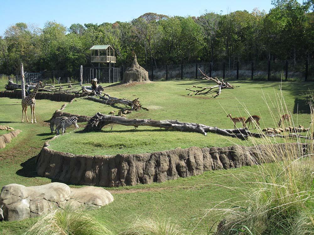 Dubai Zoo: http://famouswonders.com/dubai-zoo/