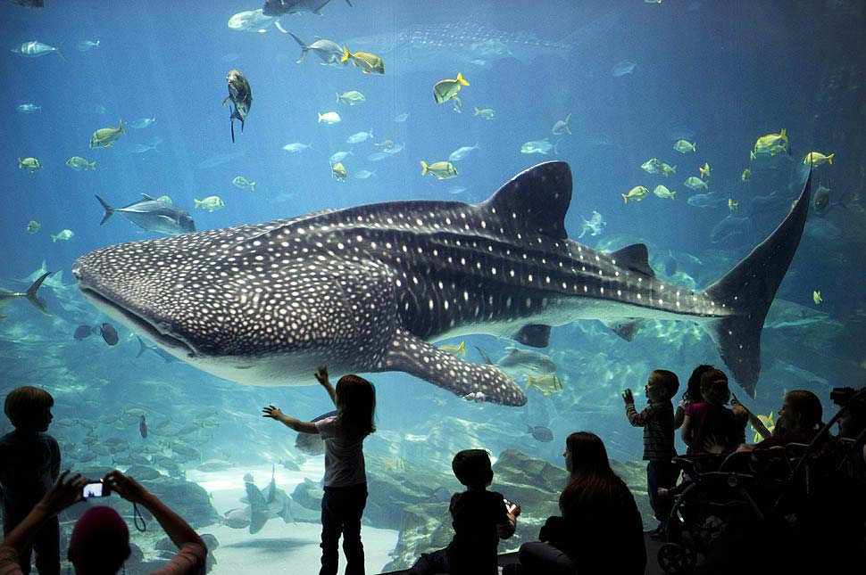 Best aquariums in the united states for Shark fish tank