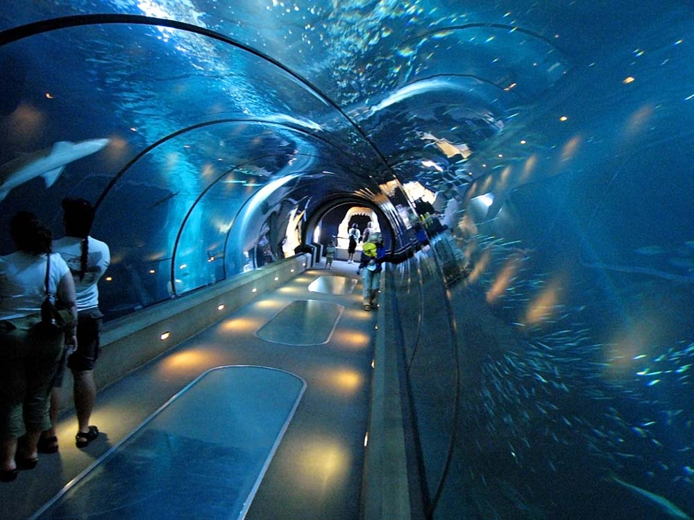 Image Result For Ny Aquarium Price