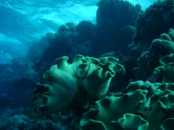 Taken at around 20m underwater... these weird corals were very funny to look at