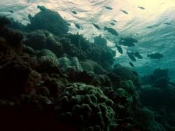 Alien Waterscape at Great Barrier Reef