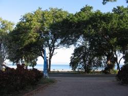 Tamarind Trees Near Great Barrier Reef