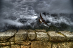 Caracara Takes Flight at Machu Picchu
