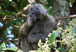 Why is the Monkey Scratching Himself?